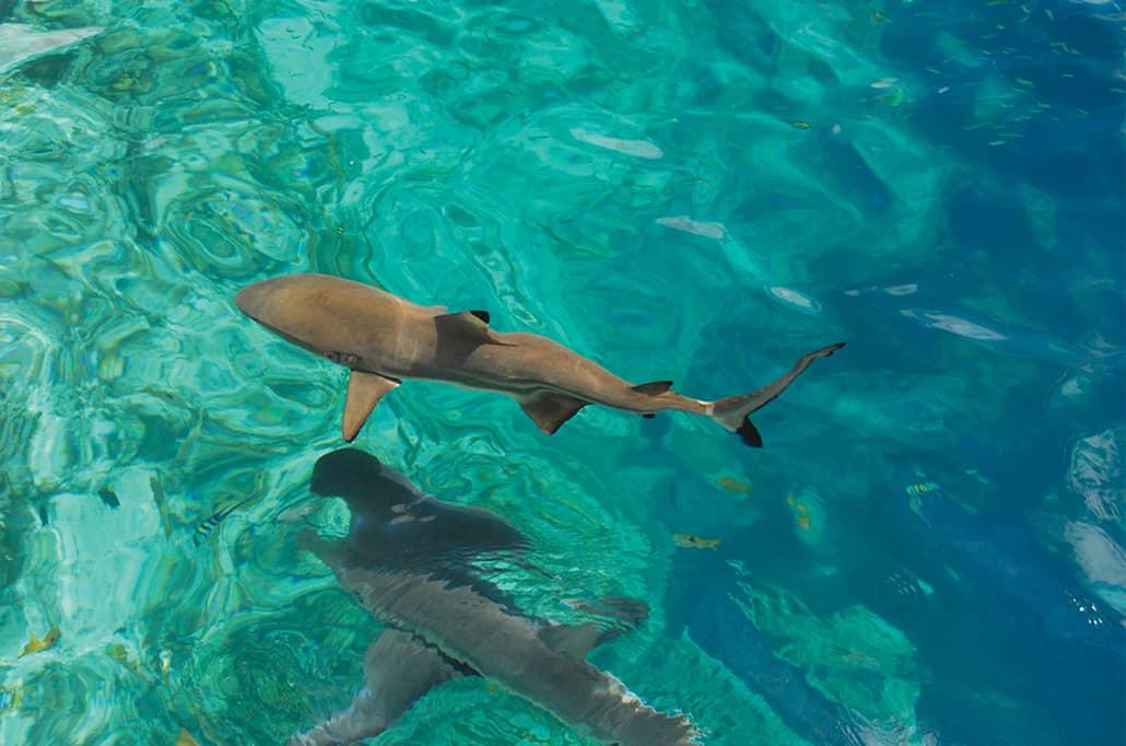 Uepi Island marine Coral Expeditions