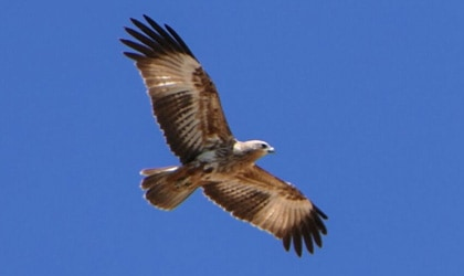 Kimberley Bird
