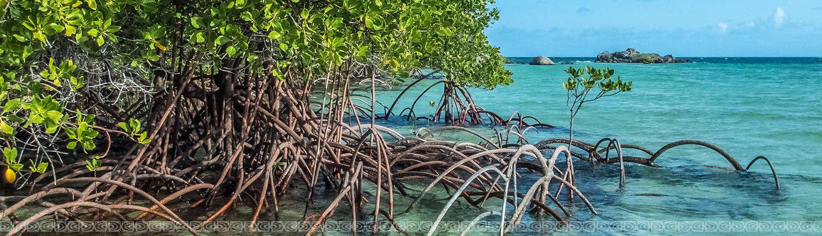 Mangroves in Australia's Top End