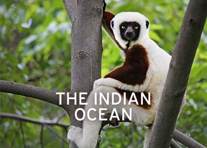 Indian Ocean Coral Expeditions
