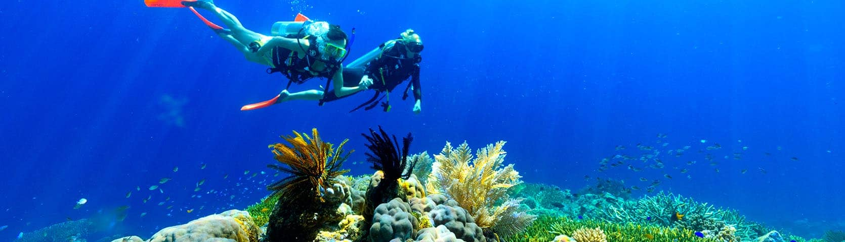 Snorkeling Scuba Diving Information Coral Expeditions