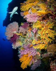 Coral Expeditions launches new Great Barrier Reef expedition cruises in 2021.
