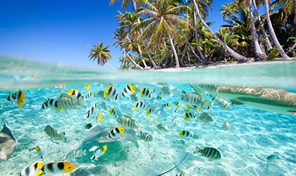 Tropical Snorkelling