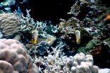 Coral Dive Fish Raja Ampat