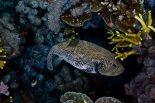 Banda Neira Dive Fish