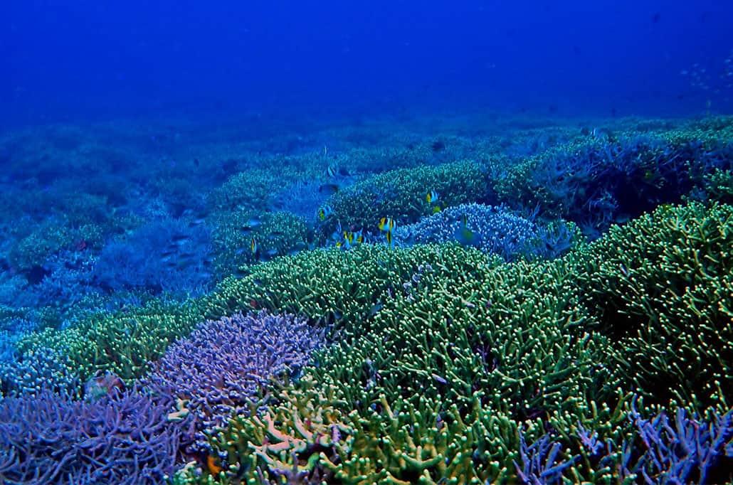 Banda Neira Coral