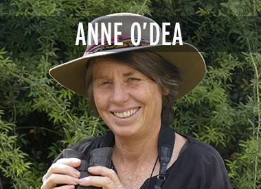 Anne O'Dea