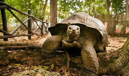 Aldabra - Seychelles