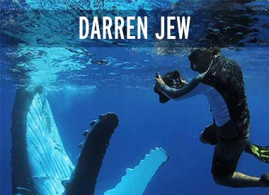 Darren Jew Bio