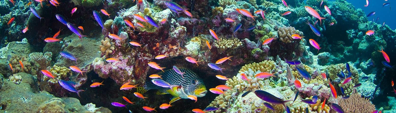 Osprey Reef Darren Jew Photography