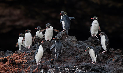 New Zealand Fiordland Coral Expeditions