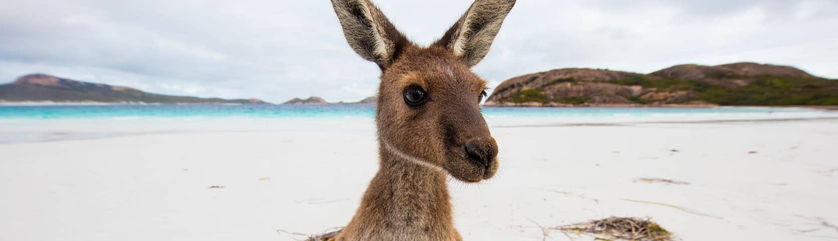 Across the Great Australian Bight - Adelaide - Fremantle