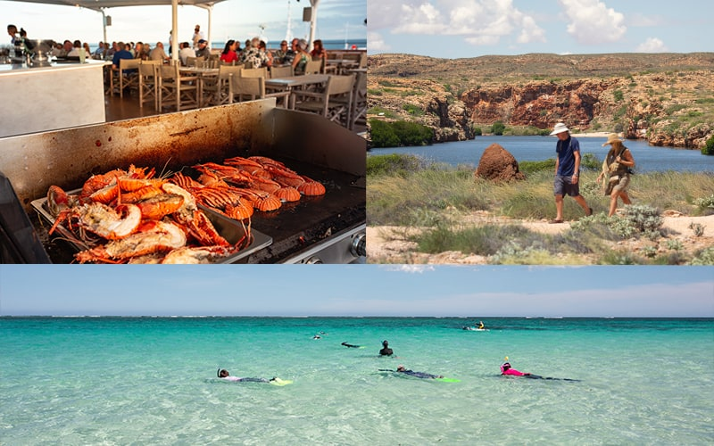 Exmouth and Ningaloo Reef Coral Expeditions