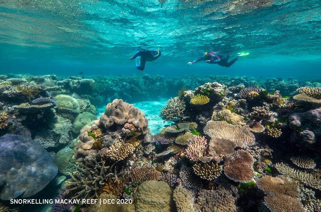Guests-snorkelling-Mackay-Reef-December-2020