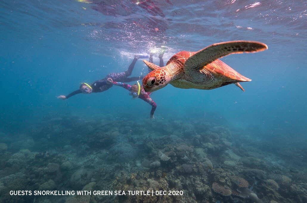 Guests-snorkelling-with-Green-Sea-Turtle-Mackay-Reef-2020