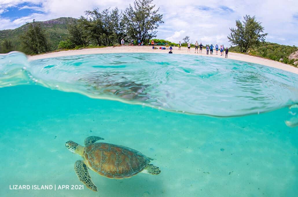 LIzard-Island-Green-Sea-Turtle-April-2021