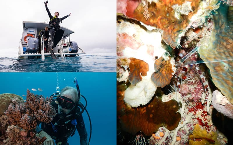 Ribbon Reef No9 Day 7 - Citizen Science Voyage