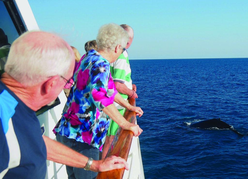 Whale Watching Kimberley