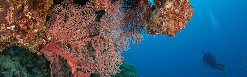 Exploring Osprey Reef