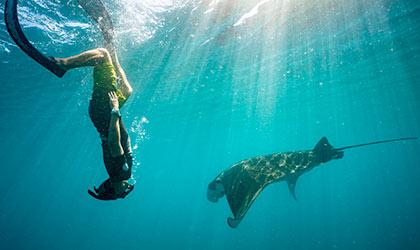 Ningaloo-Reef-Manta-Ray-Snorkel-th
