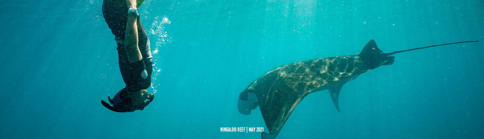Ningaloo-Reef-Manta-Ray-Snorkel